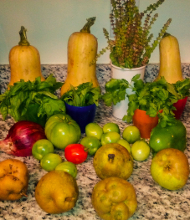 Click to see image of partial September 2014 harvest